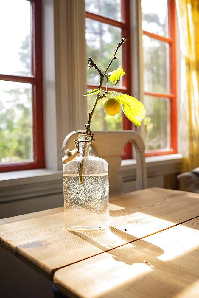 Yellow cherry plum growing on small branch in glass bottle on sunny table