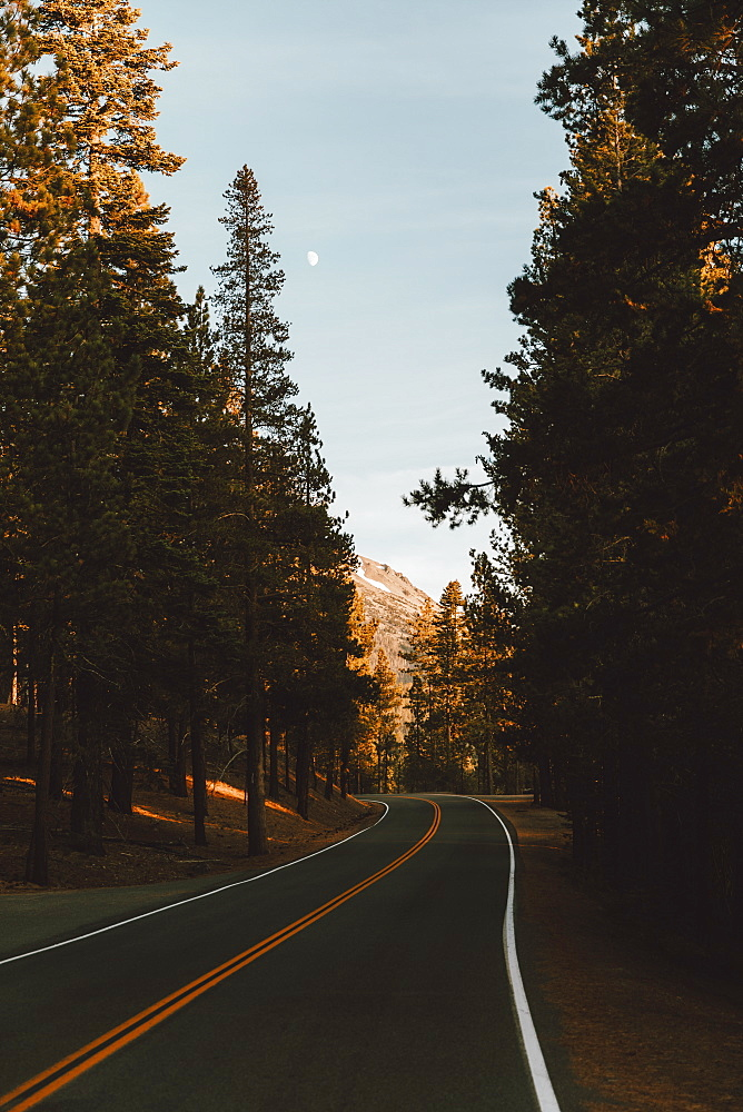 Winding road among forest trees, Redding, Shasta County, California, USA