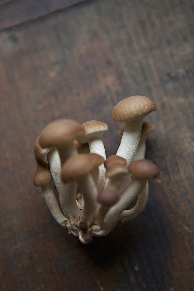Close-up of shimeji mushrooms on wooden table