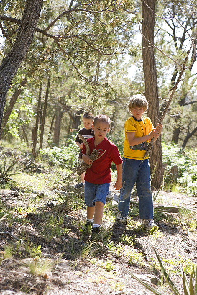 Three boys collecting wood in a forest