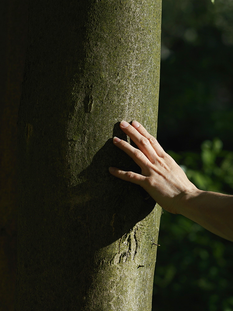 A human hand touching a tree trunk