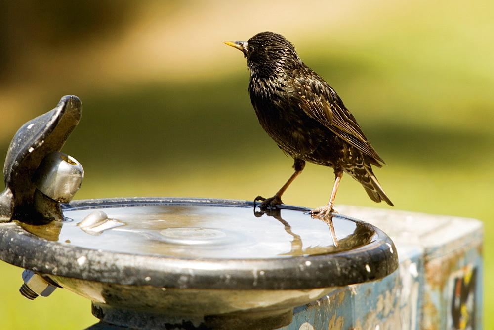 Side profile of a bird perched on a bird bath