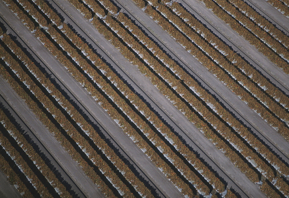 Aerial of tomato fields, Florida