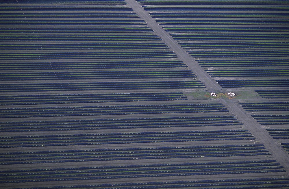 Aerial of strawberry farm, Florida