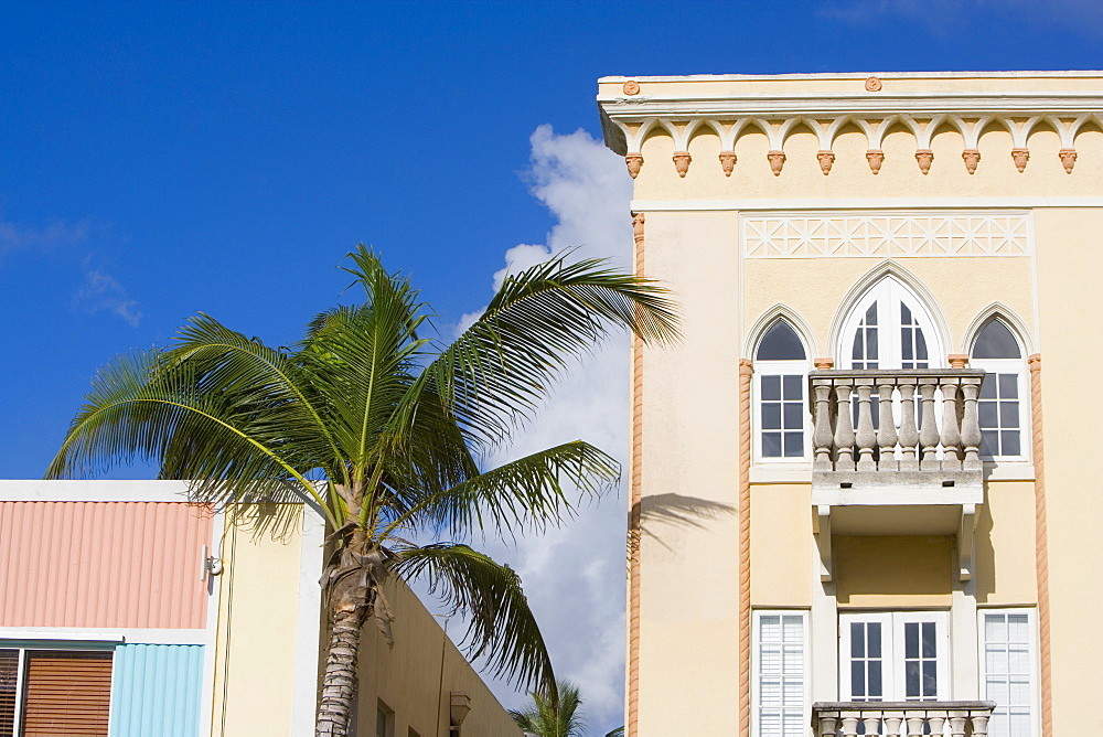 Low angle view of a palm tree in front of buildings, South Beach, Miami Beach, Florida, USA