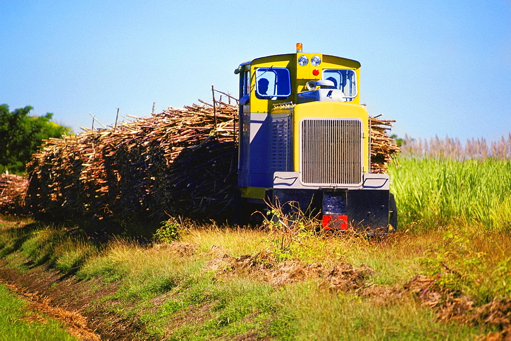 Sugar cane loaded on a semi truck, Nadi, Fiji