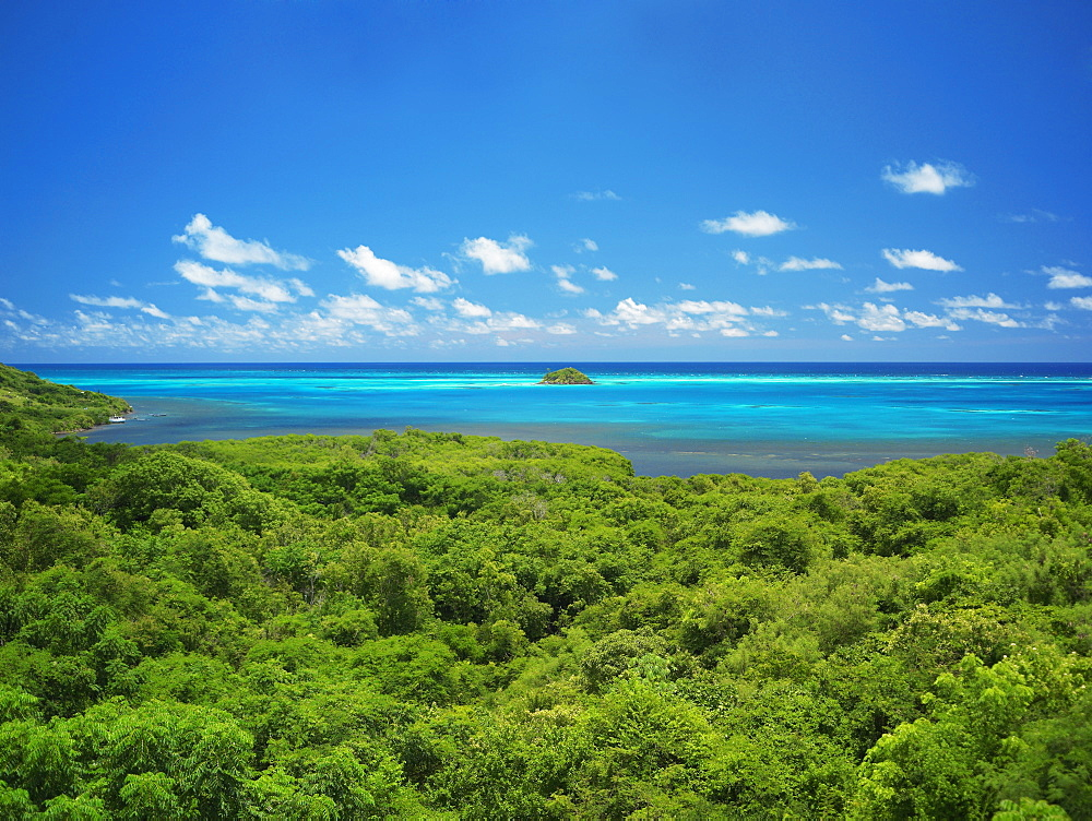 High angle view of trees at the seaside, Crab Cay, Providencia, Providencia y Santa Catalina, San Andres y Providencia Department, Colombia