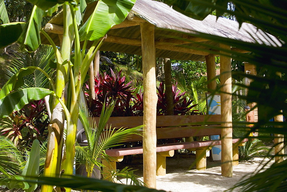 Banana tree in front of a hut, Roatan, Bay Islands, Honduras