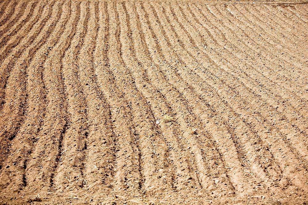 High angle view of a plowed field, Puno, Peru