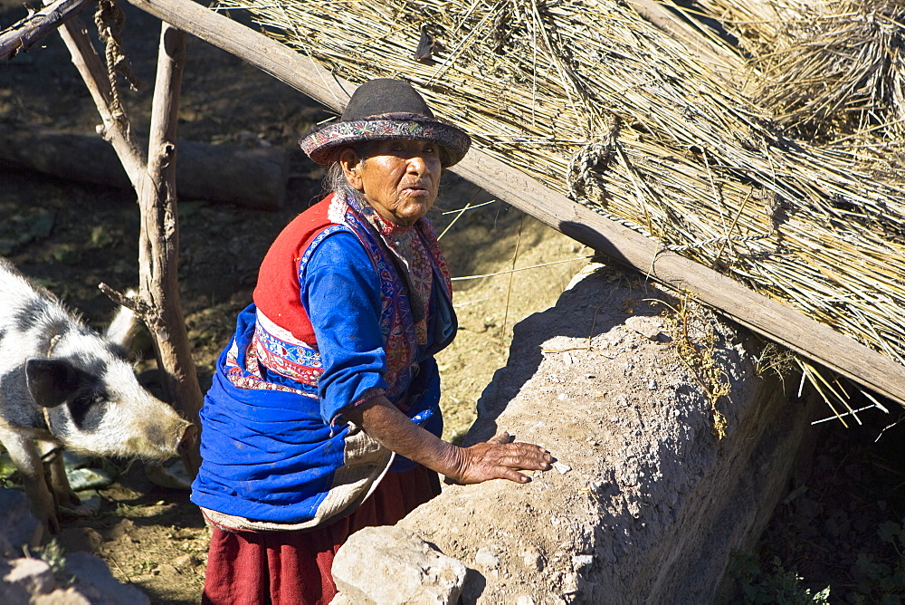 High angle view of a senior woman standing with a pig in a barn, Coshnirua, Peru