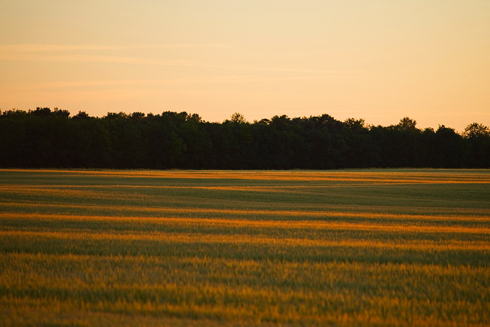 Silhouette of trees along a field, Loire Valley, France