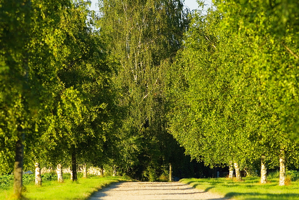 Trees along a dirt road, Loire Valley, France