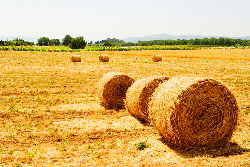 Hay bales in a field, Siena Province, Tuscany, Italy