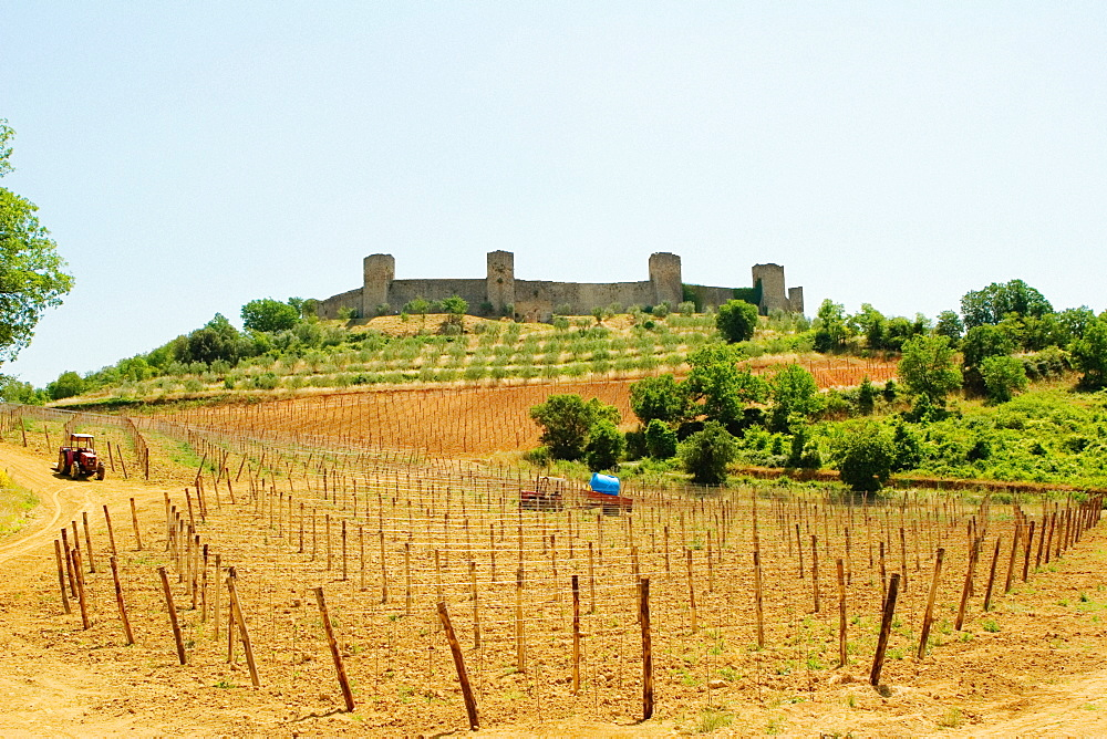 Vineyard in front of a fort, Monteriggioni, Siena Province, Tuscany, Italy