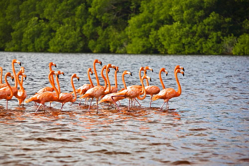 Flock of Ria De Celestun birds in water, Yucatan, Mexico