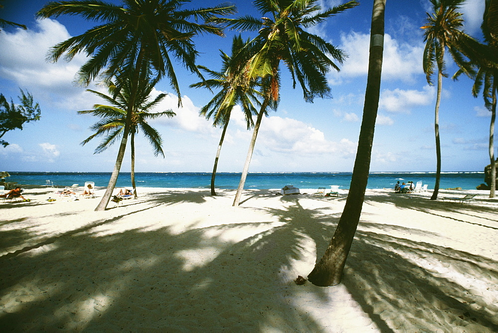View of a beach with white sands and palm trees, Barbados