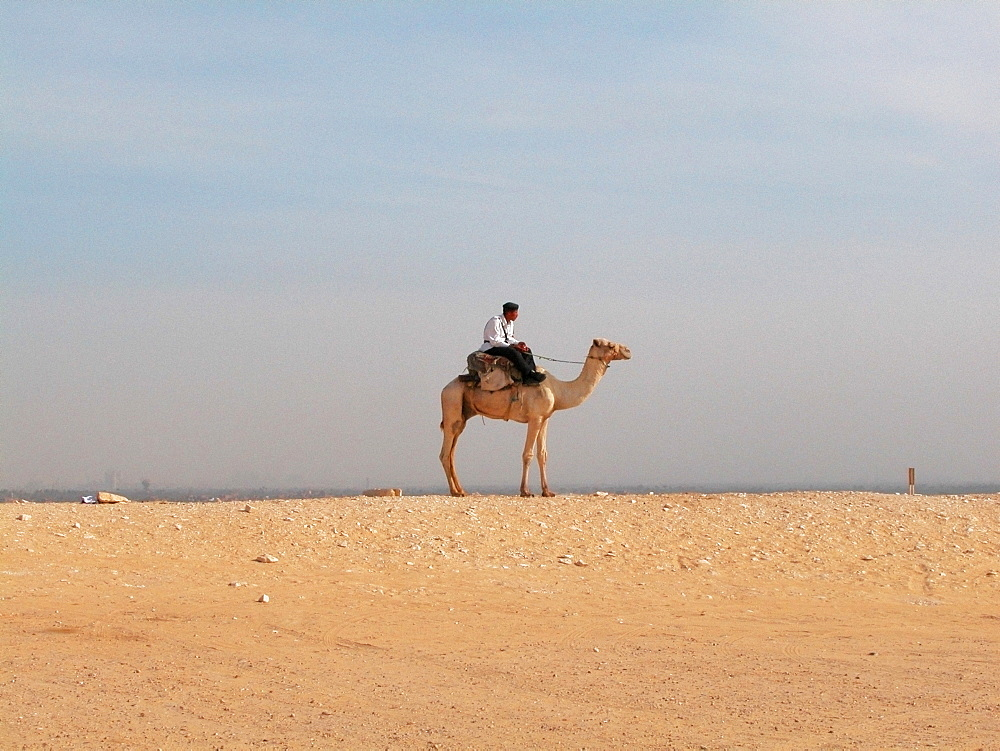 Side profile of a man riding a camel