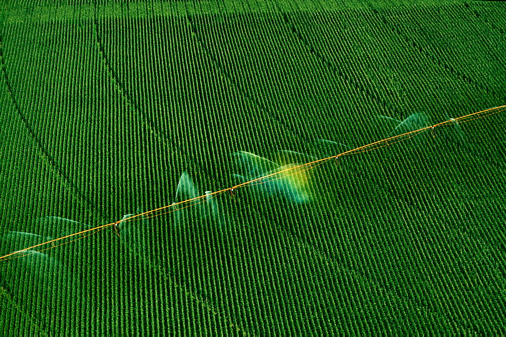 Central pivoit irrigation system, shot from above, Nebraska