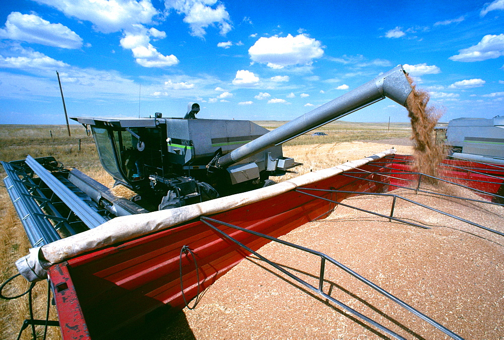 Close-up of Combine loading harvested wheat into truck. Cheyenne, WY