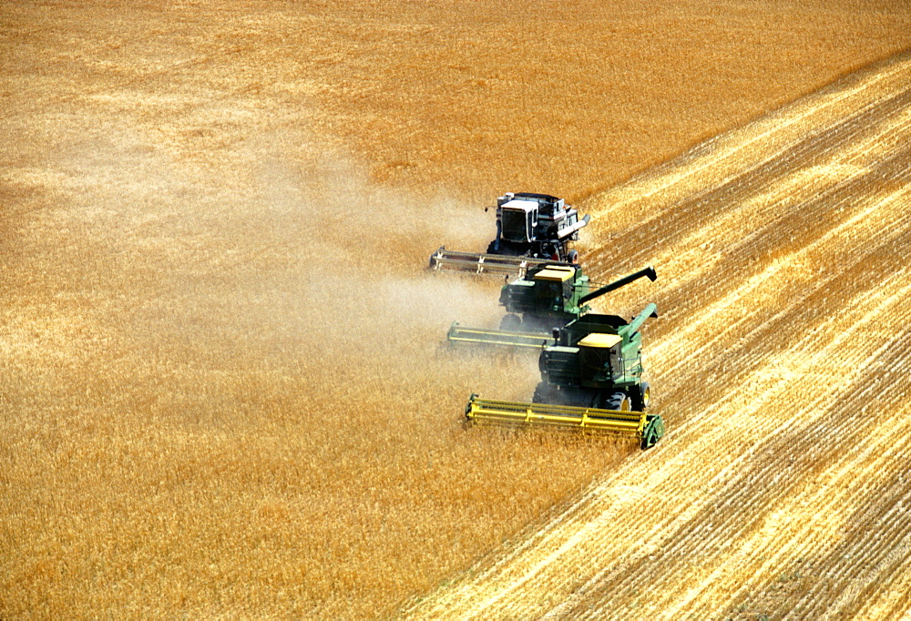 Three combines harvesting wheat in Burlington