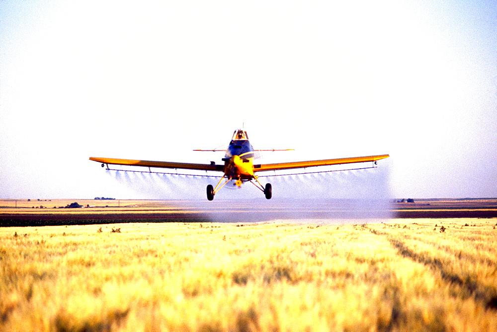 Plane spraying pesticide barley field in Colorado