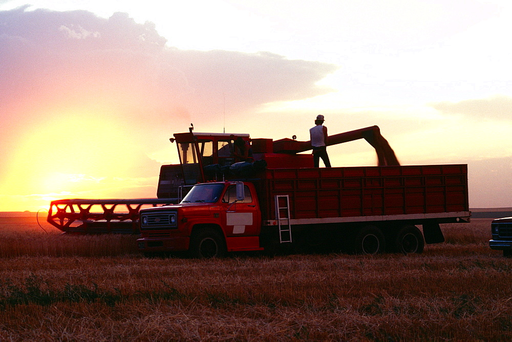 Wheat harvest and a combine with sunset in the background , Burlington , Colorado