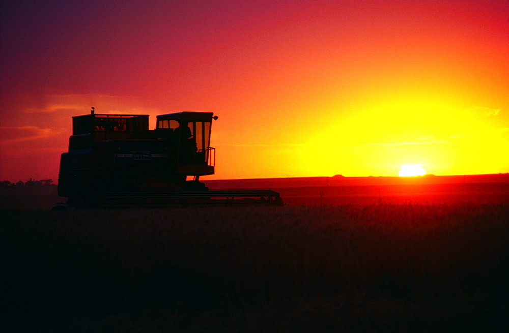 Wheat harvest and a combine with sunset in the background, Burlington ,Colorado