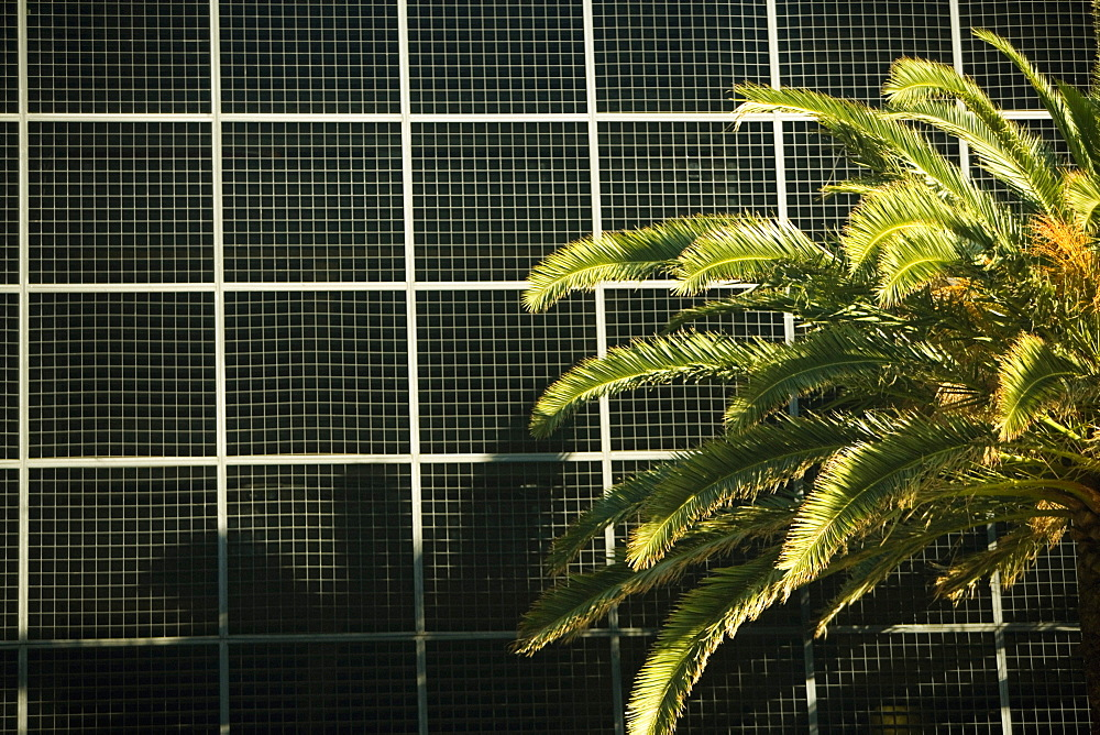 Close-up of a palm tree in front of a building, Miami, Florida, USA