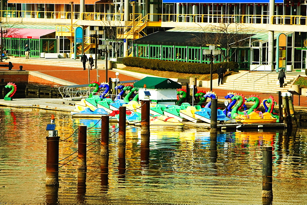 Dragon boats docked at a harbor, Inner Harbor, Baltimore, Maryland, USA