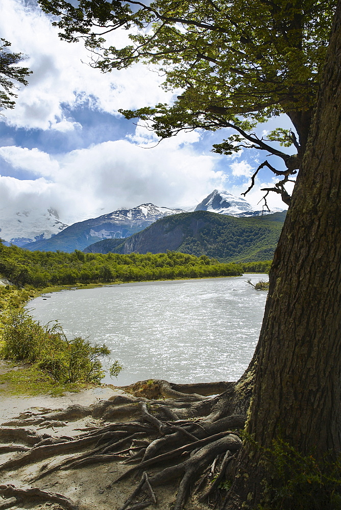 Trees at the lakeside with mountains in the background, Lake Argentino, Argentine Glaciers National Park, Patagonia, Argentina