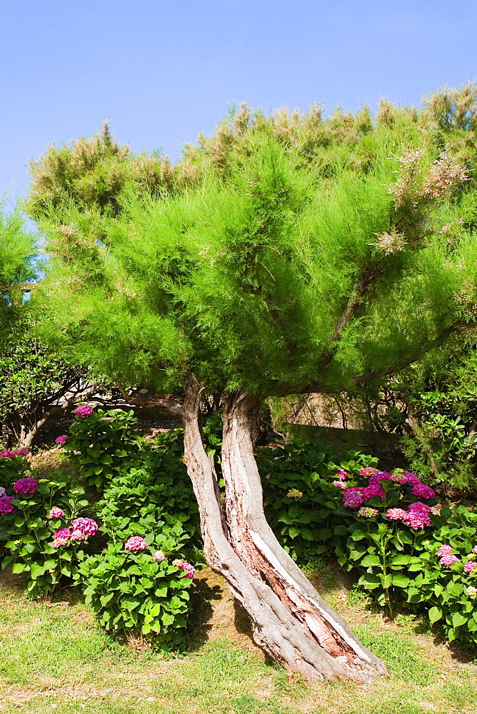 Trees and plants in a garden, Biarritz, Basque Country, Pyrenees-Atlantiques, Aquitaine, France
