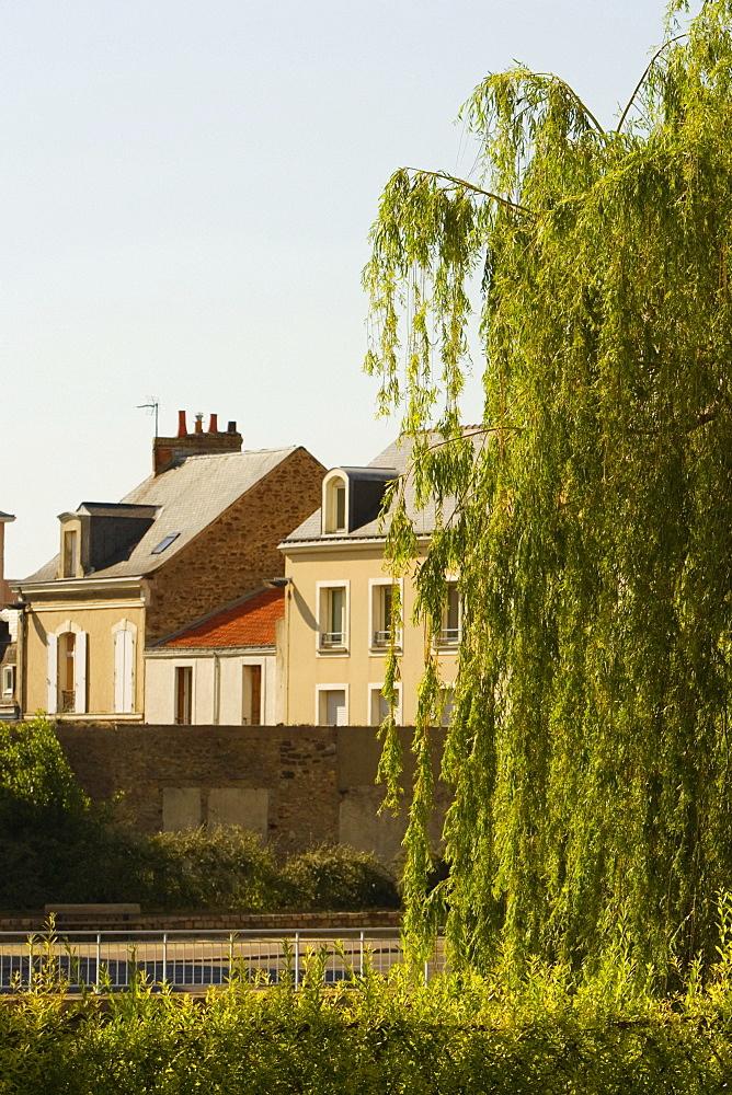 Tree in front of a medieval house, Le Mans, Sarthe, Pays-de-la-Loire, France