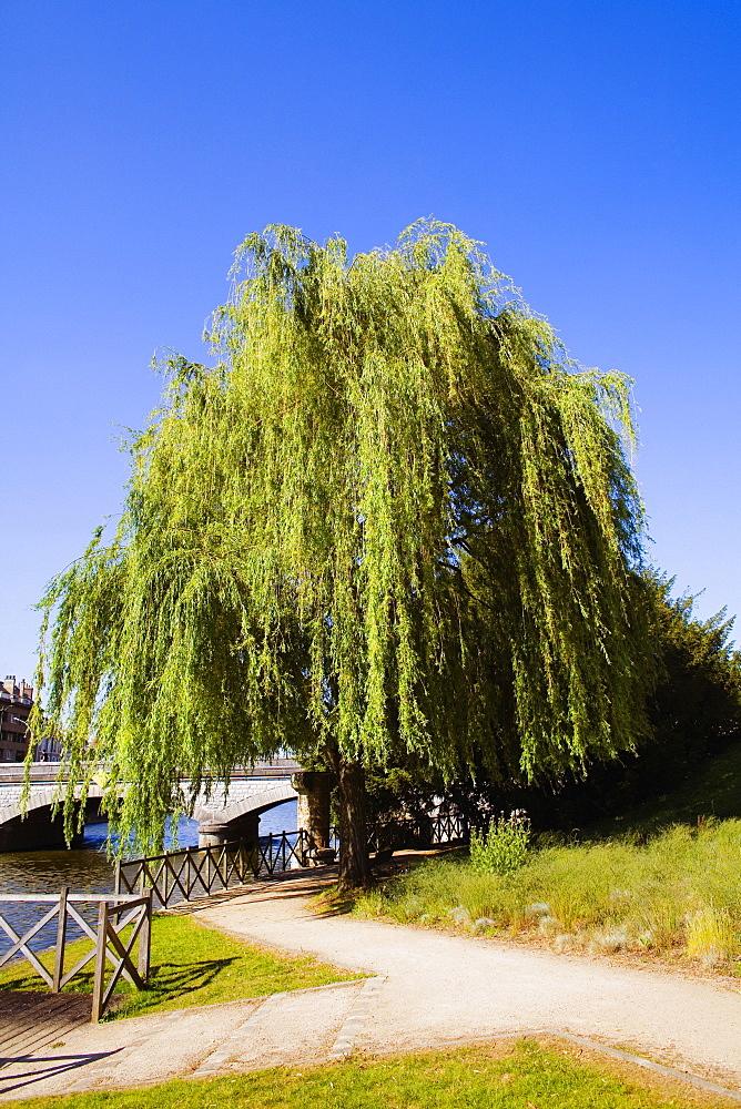 Tree at the riverside, Sarthe River, Pont Yssoir, Le Mans, Sarthe, France
