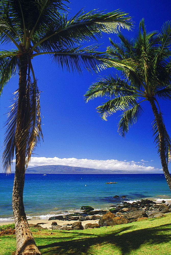 Low angle view of two palm trees on the beach, Hawaii, USA