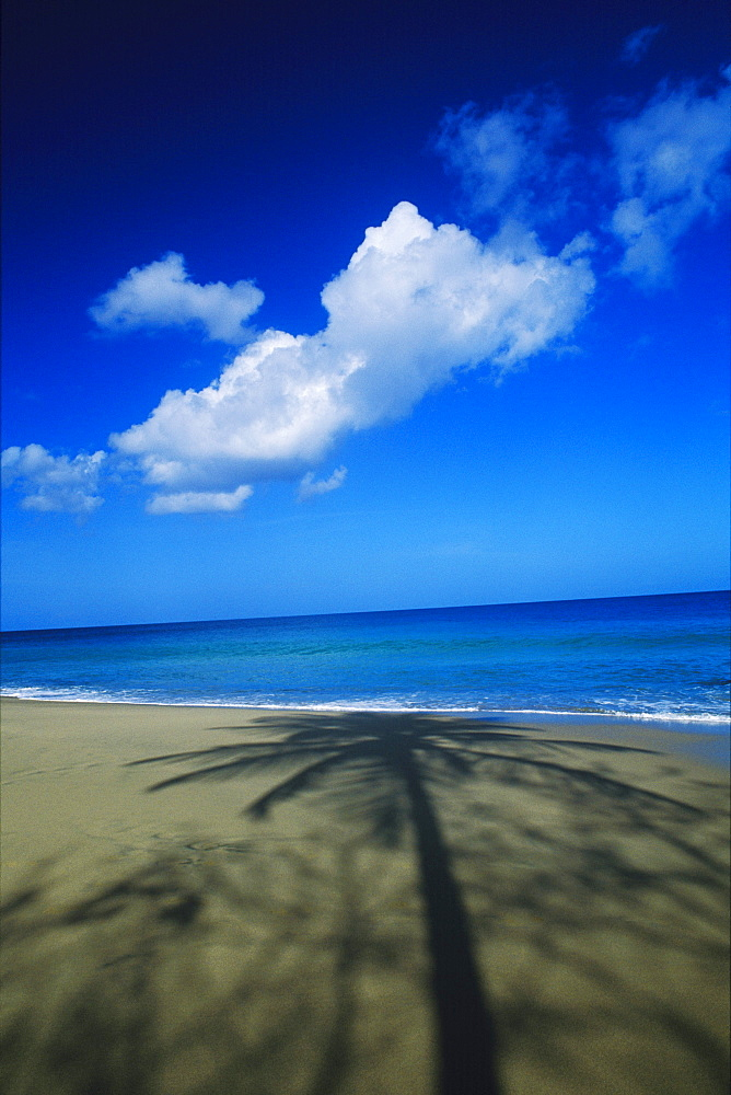 Shadow of a palm tree on the beach, Caribbean