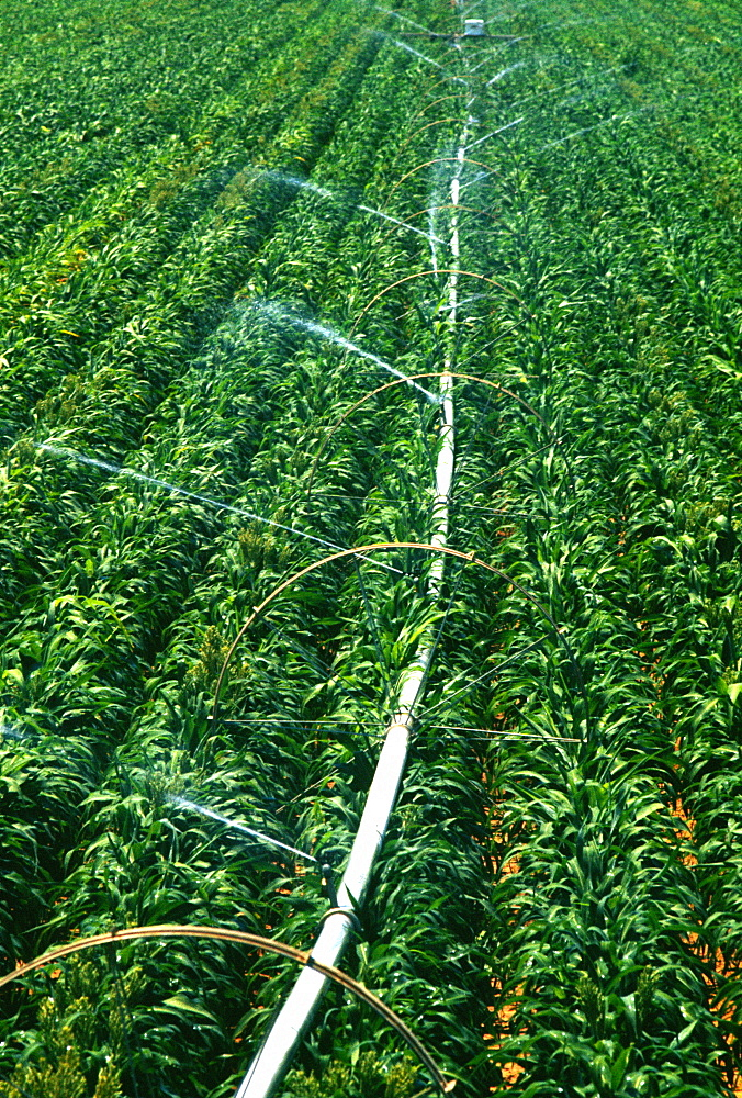 Irrigation system for soy beans in Midwest , USA