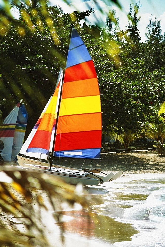 Side view of brightly colored sails on windsurf boards, Jamaica