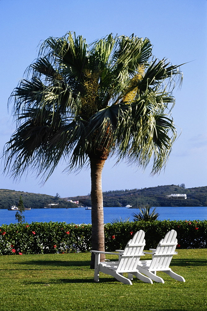 Two armchairs placed near a tree, Grotto bay, Bermuda