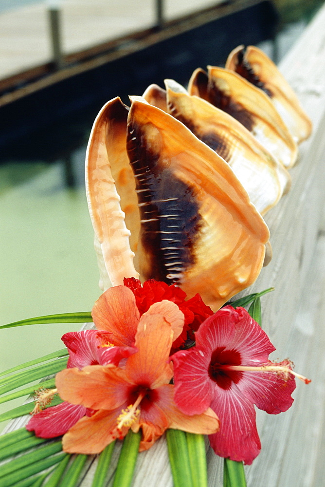 Front view of beautifully arranged conch shells and flowers