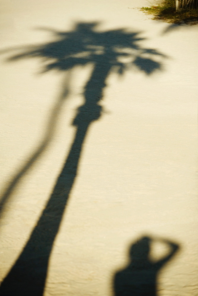 Shadow of a palm tree and a person on the sand