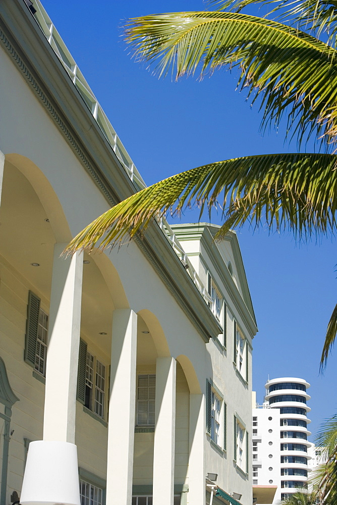 Low angle view of a palm tree in front of a building, Miami, Florida, USA