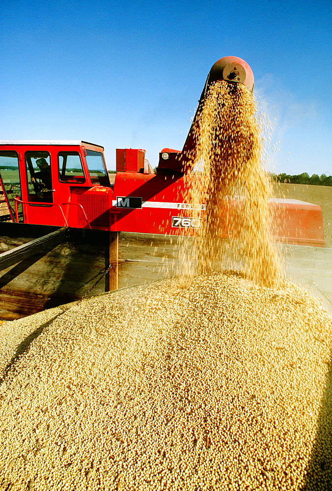 Close-up of combine loading soy beans into the truck, Midwest, USA