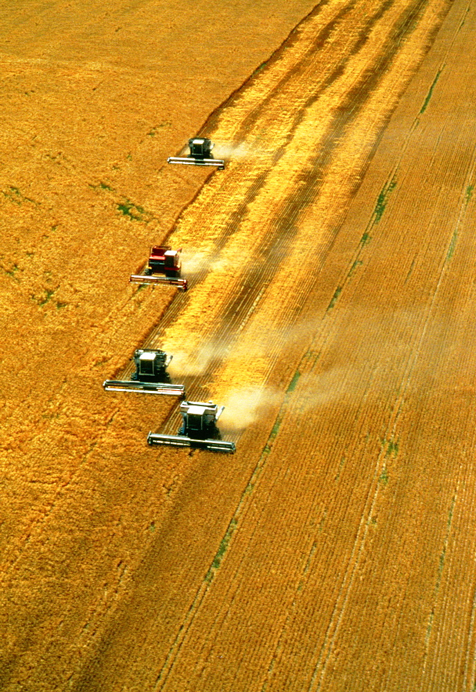Aerial view of wheat harvest with four combines in a role,Burlington, CO