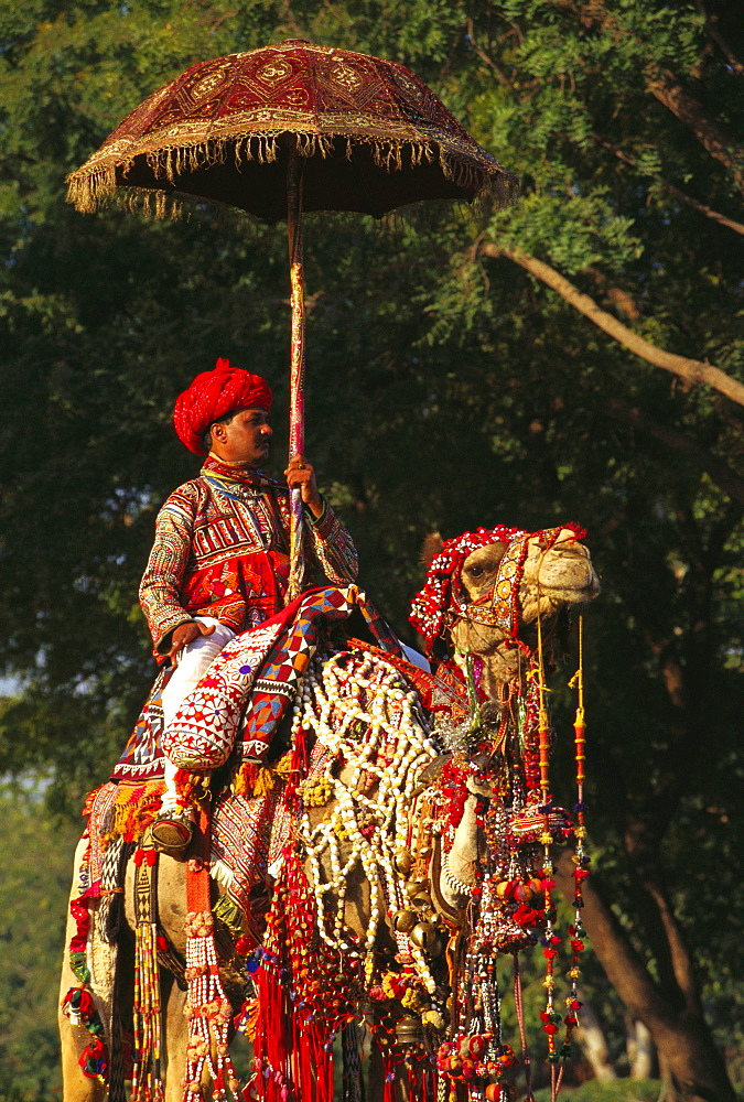Mid adult man riding a decorated camel, Jaipur, Rajasthan, India