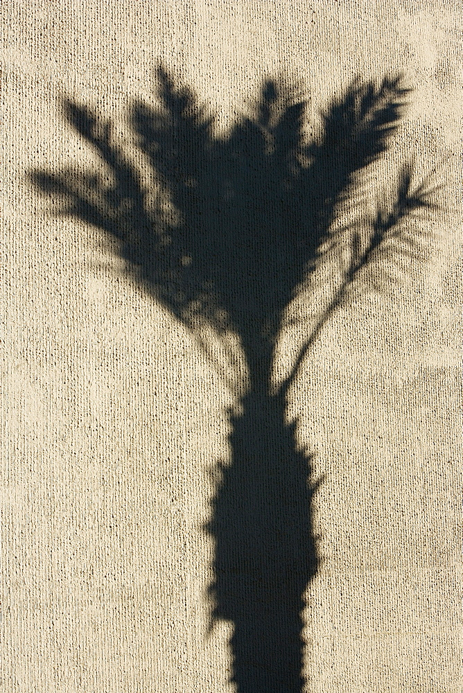 Shadow of a palm tree on a wall