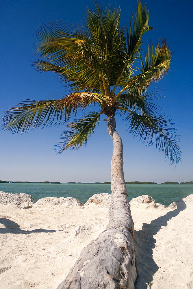Close-up of a palm tree on the beach