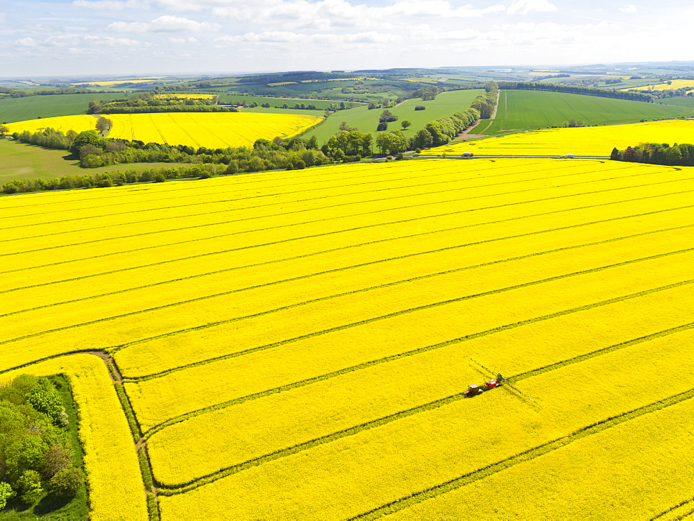 Aerial Of Tractor Spraying Oilseed Rape Crop With Pesticide (Drone) - 786-10211