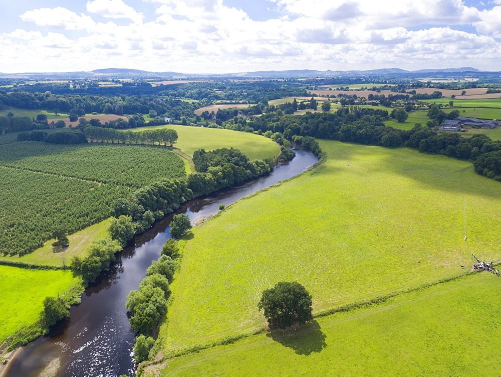 Aerial View Of Green English Farm Fields In Herefordshire (Drone) - 786-10217