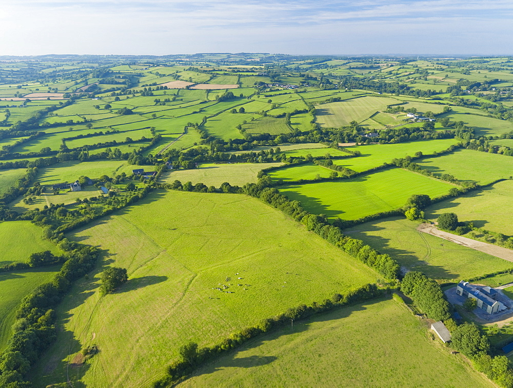 Aerial View Of Green English Farm Fields In Dorset (Drone) - 786-10218