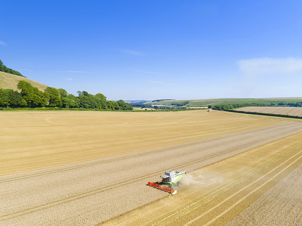 Aerial View Of Combine Harvester Harvesting Wheat Crop (Drone) - 786-10219